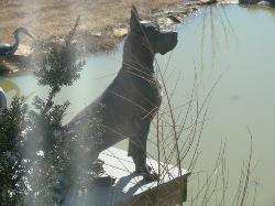 Breeder akc great dane puppies ky for sale stud